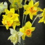андрияка, цветы