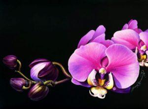 Ирина Гармашова-Коотон, орхидея