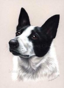 Ирина Гармашова-Коотон, собака, графика