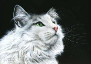 Ирина Гармашова-Коотон, кот, графика, кошка
