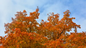 клён, музей, виды, осень, горизонт